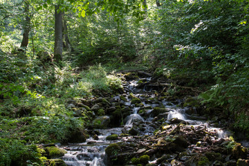 Forest stream.