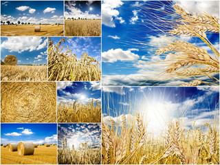 Collage: Erntezeit, Weizenfelder, Strohballen