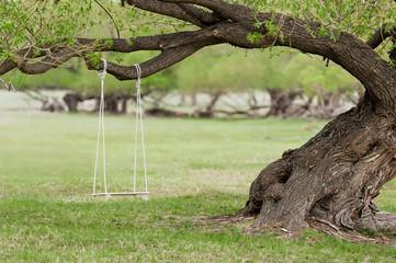 Swing by spreading tree