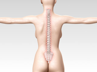 woman backbone 3d illustration