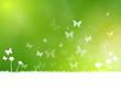 Hintergrund Blumenwiese