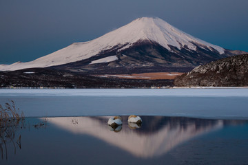 A pair of mute swans in Lake Kawaguchi in the reflection of Mt. Fuji, Japan