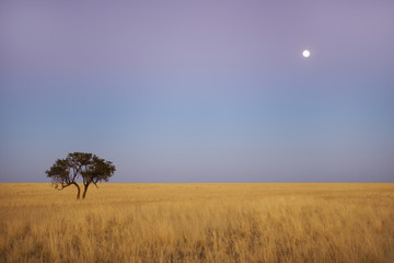 Full moon over grassy plains, Namib-Naukluft National Park, Namibia