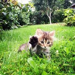 Kitten on green grass