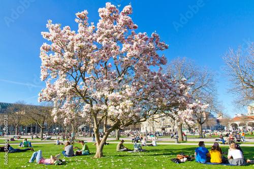 Fotobehang Magnolia Magnolienblüte in Stuttgart - Schlosspark