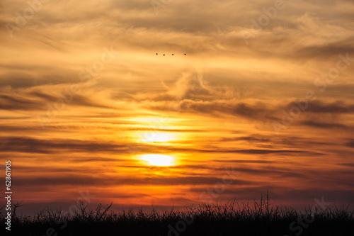 flying birds on dramatic sunset background