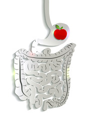 Paper digestive system and apple in the stomach