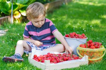 Happy little toddler boy in summer garden with buckets of ripe s