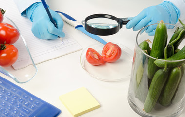 Halved tomato inspected in phytocontrol laboratory