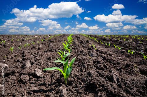 Deurstickers Cultuur Corn field
