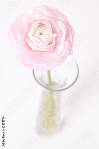 Pinkish Buttercup in glass vase on white