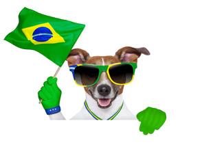 brazil  fifa world cup  dog