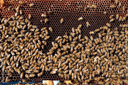 Staande foto Bee honey frame