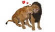 calin entre lion et lionne