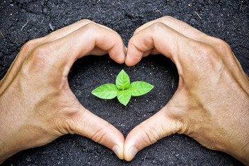 two hands forming a heart shape around a young green plant