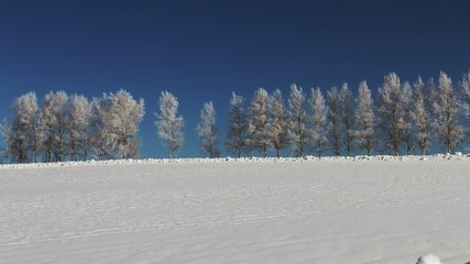 美瑛の丘の樹氷の並木道