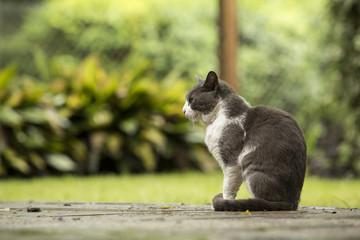 Gato en patio