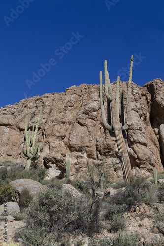 Arizona Saguaro in Mountain Desert