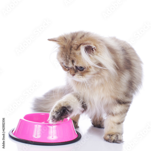 Persian cat at food bowl