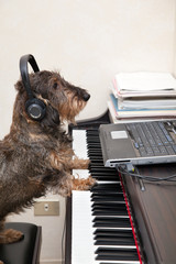 Music pet therapy
