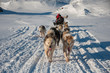 Leinwandbild Motiv Dog sledding in Tasiilaq, East Greenland