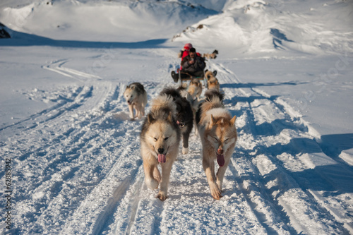 Foto op Canvas Poolcirkel Dog sledding in Tasiilaq, East Greenland