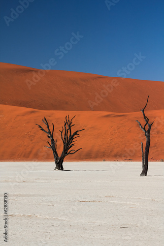 Dead Trees and Dunes in Deadvlei, Namibia