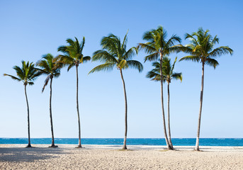 Palm Trees At Tranquil Beach