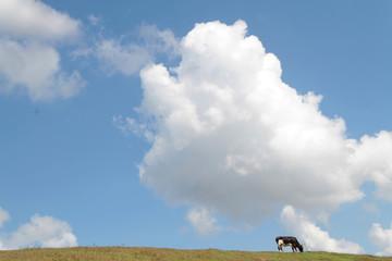 Des nuages et une vache