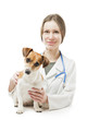 Jack Russell terrier with vet nurse