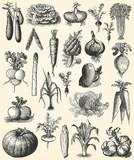 Fototapety Vegetable