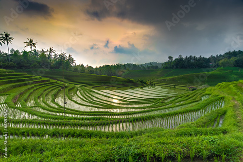Sunset above the rice-field 2