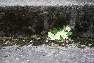 Little flowers under old steps