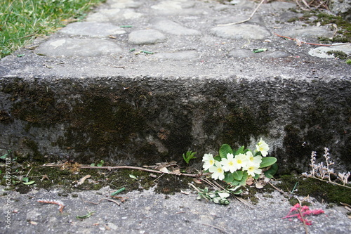Little flowers under old stairs