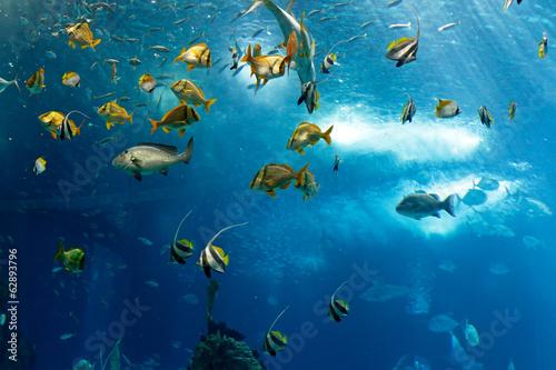 fototapeta na ścianę Kolorowe ryby