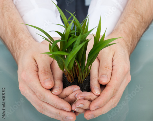 Businesspeople Holding Plant In Cupped Hands