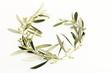Rami e foglie d'ulivo a forma di cuore