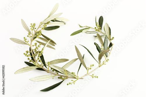 Papiers peints Oliviers Rami e foglie d'ulivo a forma di cuore
