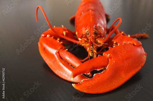 Front view of Boiled Atlantic Lobster