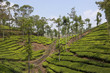 kerala tea country