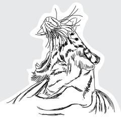 Tiger hand - drawn