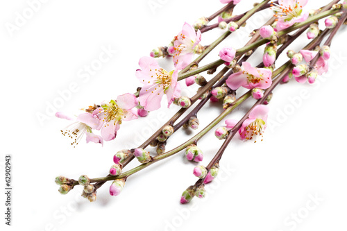 peach flowers isolated on white background