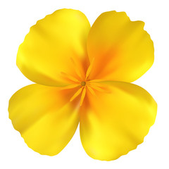 Beautiful yellow flower. Isolated on white. Vector illustration