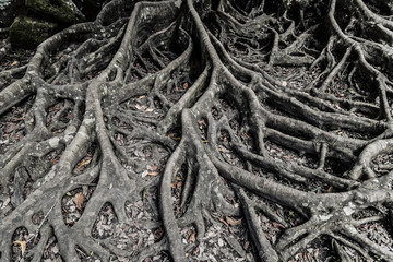scary roots