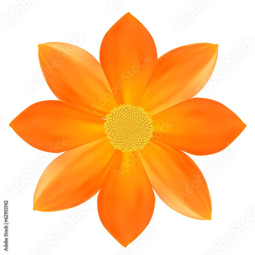 Yellow flower. Isolated on White. Vector illustration