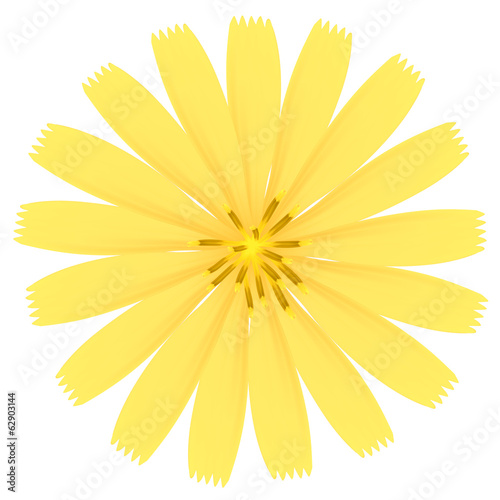 Yellow flower. Vector Illustration.