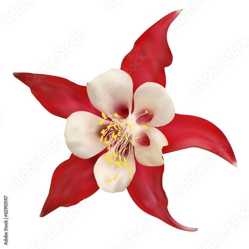 Red Flower. Vector illustration