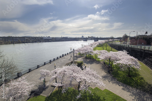 Fotobehang Kersen Cherry Blossoms Along Portland Willamette River