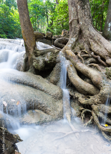 Tropical tree roots and Erawan waterfall outdoor