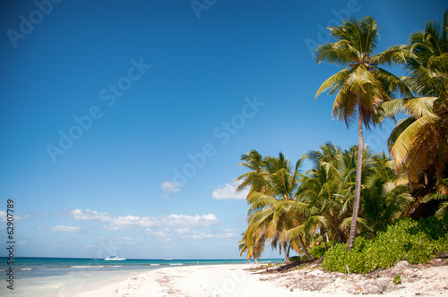 Beautiful white beach with tropical palm trees, Saona, Caribbean